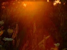 日落的草本植物 免版税库存图片
