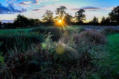 日落的草甸 库存图片