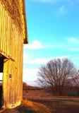 日落的金黄与光秃的分支的谷仓和树展开了 免版税库存照片