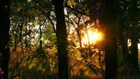 日落的长得太大,不通的森林 太阳光芒穿过树分支  背景蓝色云彩调遣草绿色本质天空空白小束 股票视频