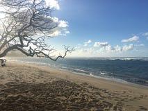 日落的风平浪静在大岛,夏威夷的海岸 库存图片