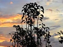 日落的风景 颜色爆炸  免版税图库摄影