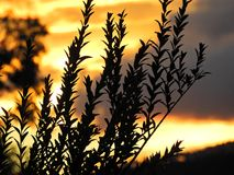 日落的风景 颜色爆炸  免版税库存图片