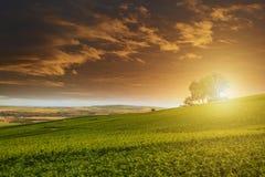 日落的, Montagne de兰斯香宾葡萄园 库存图片