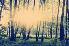 日落的绿色森林 免版税库存图片