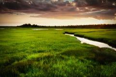 日落的绿色草甸 库存图片