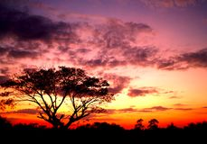 日落结构树 免版税库存图片