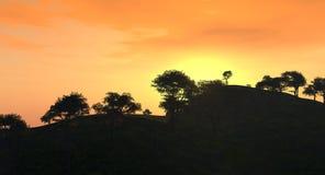 日落结构树 免版税图库摄影