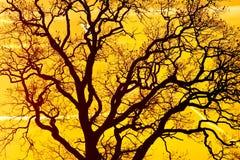 日落结构树 库存照片