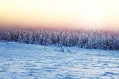 日落美好的风景在冬天森林里 库存照片