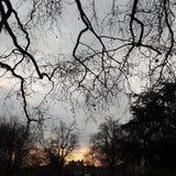 日落自然秀丽公园树冬天 免版税库存图片