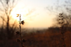 日落自然 免版税图库摄影