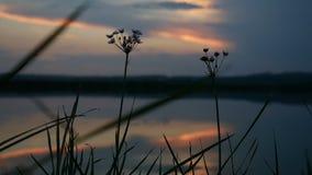 日落草剪影在背景山录影自然风景的湖水 股票录像