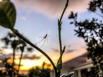 日落蜘蛛网 图库摄影