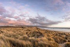 日落被射击在沙丘的鼠尾草在Limantour海滩,加州 免版税库存图片