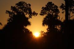日落被采取在大赛普里斯,沼泽地,佛罗里达 库存图片