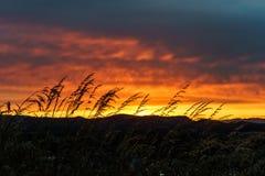 日落被采取在登上Tolmie在维多利亚, BC 免版税图库摄影
