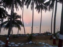 日落通过可可椰子 免版税库存图片