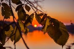 日落通过叶子 免版税库存图片