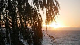 日落通过在海滩的树 免版税库存照片