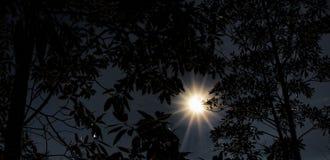 日落通过木兰 库存图片