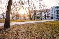 日落通过树发出光线在公园在维尔纽斯立陶宛 免版税库存照片