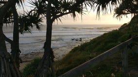日落通过棕榈 免版税库存图片