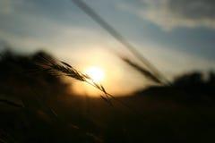 日落通过领域 免版税库存图片