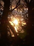 日落通过结构树 免版税库存图片