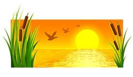 日落风景在湖的有芦苇的 库存照片