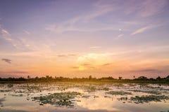 日落风景在荷花池的 免版税库存照片