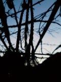 日落黑暗 免版税库存照片
