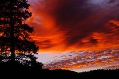 日落,在前景的杉树 图库摄影