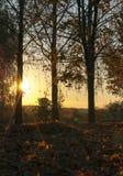 日落,秋天 库存图片