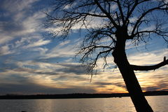 日落水和树 免版税库存图片