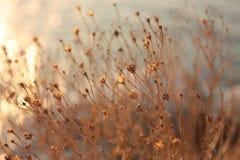 日落 在沙滩的草 背景 库存图片