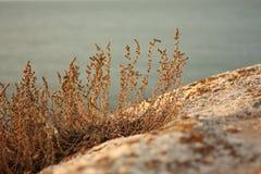 日落 在沙滩的草 免版税库存照片