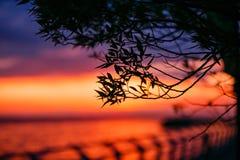 日落 在海上的美好的日落 湖sunet 惊人的日落令人敬畏的日落 日落海波浪 在杉木常设夏天日落结构树二之后 免版税库存照片