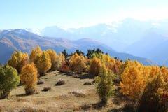 日落阴霾的美丽的山秋天森林 库存照片