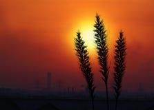 日落 免版税库存照片
