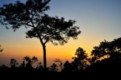 树、日落和阴影 免版税库存照片