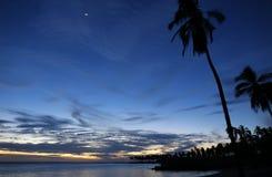 日落Cocnut树和月亮 库存图片