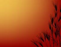 日落wheatfield 库存图片