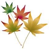 日语留下槭树向量 库存图片