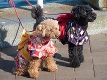 日语的小狗 库存照片