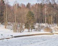 日霜1月天然公园多雪的结构树冬天 河和树和一条长凳在海滩在雪下 库存图片