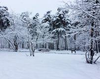 日霜1月天然公园多雪的结构树冬天 绝对白色地方 库存图片