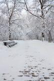 日霜1月天然公园多雪的结构树冬天 免版税图库摄影