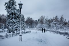 日霜1月天然公园多雪的结构树冬天 3d查出的对象人剪影 库存图片
