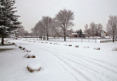 日霜1月天然公园多雪的结构树冬天 免版税库存照片